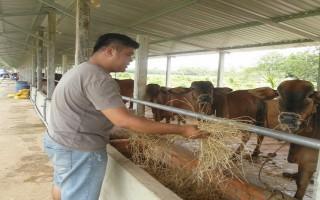Nhiều hợp tác xã nông nghiệp nỗ lực vươn xa