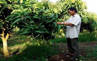 Liên kết giữa Saigon Co.op với HTX góp phần đẩy mạnh sản xuất nông nghiệp