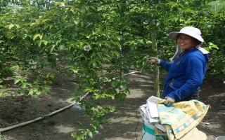Phát triển nông nghiệp ứng dụng công nghệ cao gắn với tái cơ cấu nông nghiệp