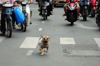 Tình trạng chó thả rông bao giờ chấm dứt ?