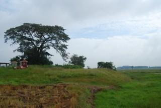 Những dấu tích của làng xưa Phước Thạnh