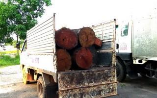 Bắt xe tải vận chuyển gỗ lậu
