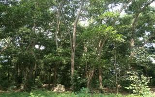 Giao đất thực hiện dự án du lịch sinh thái tại đảo Nhím – hồ Dầu Tiếng
