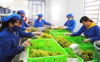 Nhân rộng mô hình sản xuất nông nghiệp sạch ở Ninh Thuận