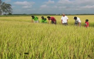 Phấn đấu đến năm 2020, giá trị sản xuất nông nghiệp ứng dụng công nghệ cao chiếm hơn 30%