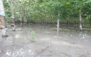 Nhiều diện tích đất nông nghiệp bị ngập úng
