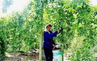 Lavifood ký hợp đồng thu mua sản phẩm trái cây của nông dân Tây Ninh