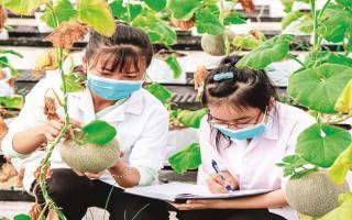 Hỗ trợ chứng nhận GAP cho nông dân trồng cây ăn quả