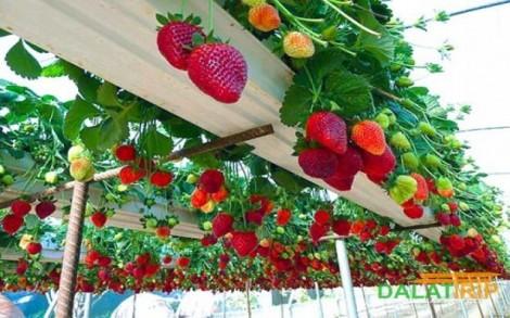 Ứng dụng CNTT vào nông nghiệp: Nguồn lợi bền vững cho doanh nghiệp