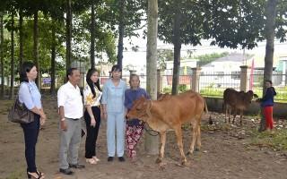 Trao bò sinh sản cho hộ phụ nữ nghèo ở thành phố Tây Ninh