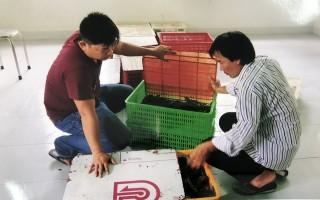 Khởi tố các đối tượng vận chuyển 3.500 con cá sấu nhập lậu