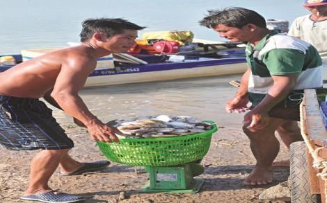 Nhộn nhịp bến cá Lòng Hồ