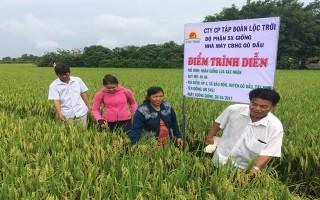 Xã hội hoá sản xuất lúa giống