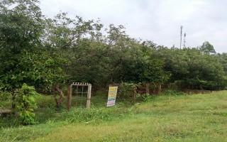Phát triển du lịch sinh thái kết hợp với Homestay