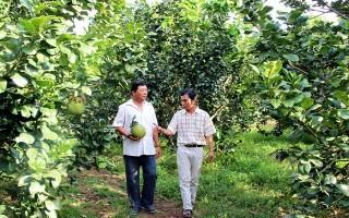 Tây Ninh khuyến khích doanh nghiệp đầu tư vào nông nghiệp chất lượng cao