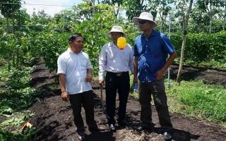 Hỗ trợ giống chanh dây cho nông dân tham gia cánh đồng lớn