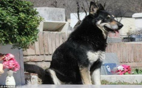Chủ chết, chó tự tìm ra mộ rồi nằm bên cạnh suốt 10 năm