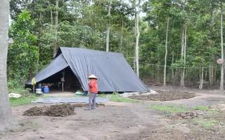 Bất hợp lý việc bảo vệ rừng ở xã Phước Ninh Kỳ 1: Rừng trồng tập trung đẹp nhất Đông Nam bộ