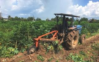 Châu Thành: Sơ kết tình hình dịch bệnh khảm lá mì