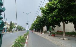 Thành phố Tây Ninh: Cần chỉnh trang lại cây xanh