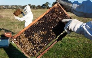 75% mật ong trên thế giới nhiễm thuốc trừ sâu