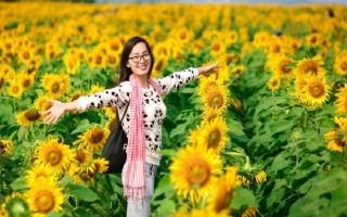 Lễ hội Hoa hướng dương Nghệ An sẽ diễn ra vào tháng 1/2018