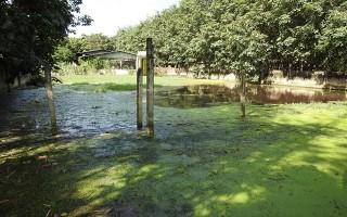 Trảng Bàng: Người dân bức xúc vì nước thải từ lò mổ gia cầm gây ô nhiễm