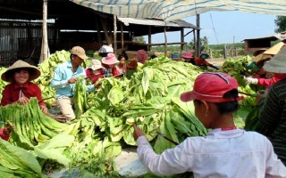 Hướng đến thực hiện Đề án tái cơ cấu ngành Nông nghiệp