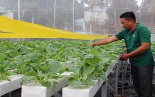 Mở rộng mô hình trồng rau thuỷ canh hồi lưu