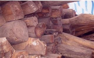Bắt giữ hơn 900 kg gỗ trắc nhập lậu không hóa đơn, chứng từ