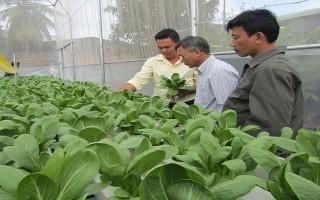 Phê duyệt Dự án nghề trồng rau thủy canh theo tiêu chuẩn VietGAP