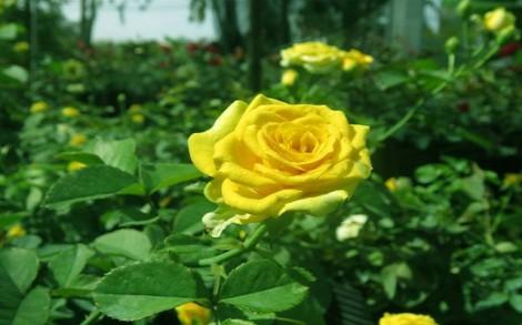 Đồng Tháp: Làng hoa Sa Đéc rộn ràng khoe sắc