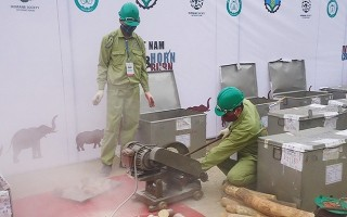 Ngăn chặn, xử lý nghiêm tội phạm buôn bán động vật hoang dã
