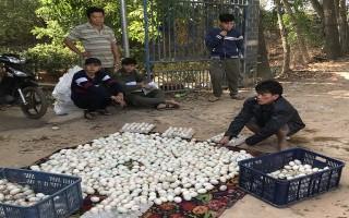 Bắt nhóm trộm trứng vịt