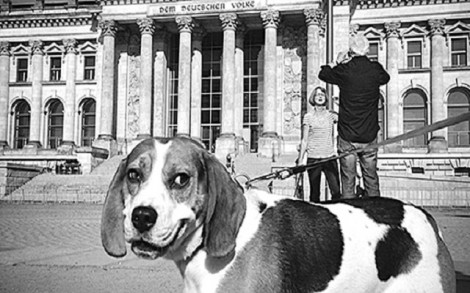 Chú chó đăng ký làm thành viên đảng ở Đức