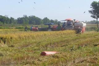Để chính sách hỗ trợ giảm tổn thất trong nông nghiệp đến với nông dân