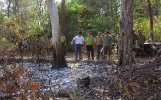 Nguy cơ cháy rừng ở cấp V