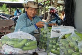 Người trồng rau ngại đăng ký chứng nhận VietGAP