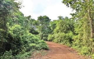 Khắc phục 300 ha trồng rừng sai mô hình, thiết kế tại khu rừng phòng hộ Dầu Tiếng