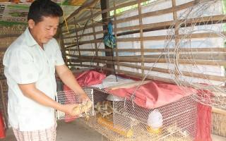 Có thêm thu nhập từ nuôi gà