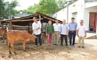 Tặng bò cho hội viên nông dân nghèo