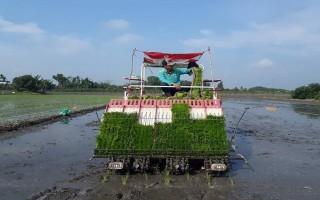 Sản xuất 60 ha lúa giống bằng công nghệ tiên tiến