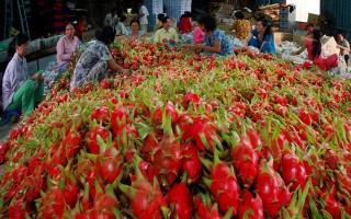 Đơn hàng xuất khẩu của Việt Nam tăng kỷ lục