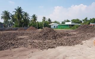 Tăng cường quản lý chất lượng, đo lường đối với củ mì tươi