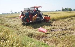 Bồi dưỡng phương pháp nghiệp vụ cho các tổ liên kết sản xuất lúa VietGAP