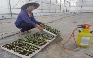 Sản xuất, cung ứng cây giống công nghệ cao tại Tây Ninh