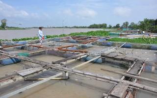 Xã Long Thành Nam: Mô hình nuôi cá thát lát cườm đạt hiệu quả cao