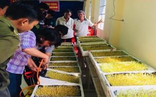 Chuyển giao kỹ thuật trồng rau mầm cho nông dân Long Chữ