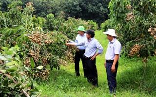 Nam Bộ chuyển đổi trên 35.000 ha lúa sang trồng hoa màu, cây ăn quả