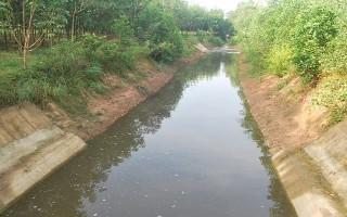 Bắt quả tang Trang trại bò sữa Tây Ninh xả nước thải chưa qua xử lý ra môi trường
